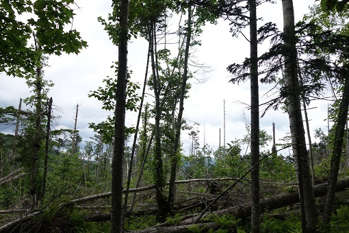 森は再生中