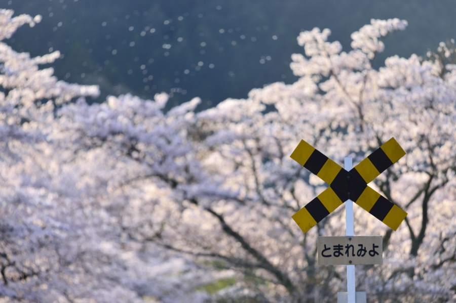 oigawa2018_27581take1b.jpg