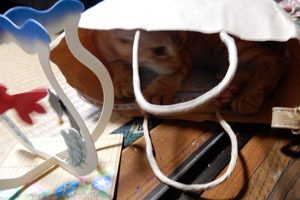 紙袋の中から襲撃2