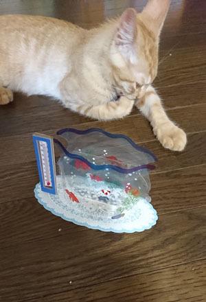 金魚鉢と3