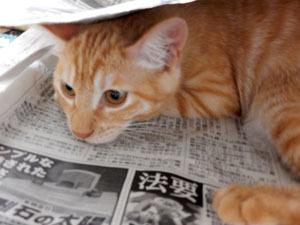 新聞にもぐるのが好き