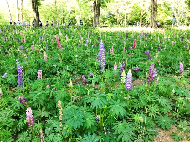 森林公園@滑川町 (3)