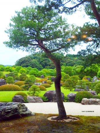 足立美術館の木々