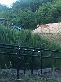 福知山 庭 鹿