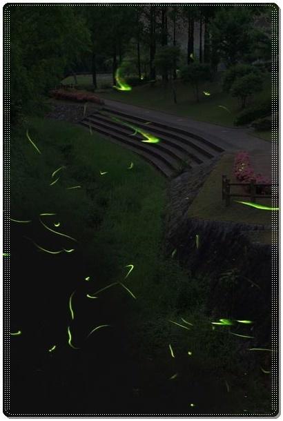 ホタル(5)Dot07
