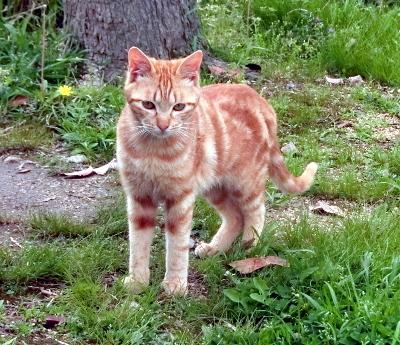 180612-ベンチのとこの野良猫-5