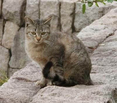 180612-ベンチのとこの野良猫-1