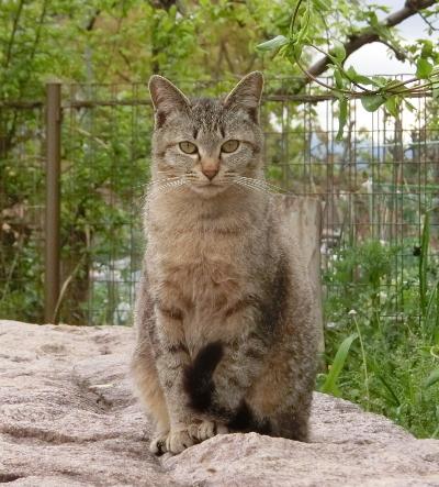 180612-ベンチのとこの野良猫-2