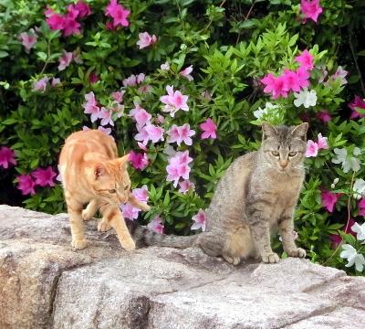 180612-ベンチのとこの野良猫-3