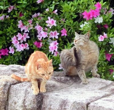 180612-ベンチのとこの野良猫-4