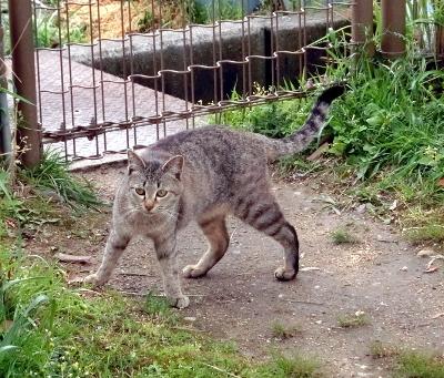 180612-ベンチのとこの野良猫-6