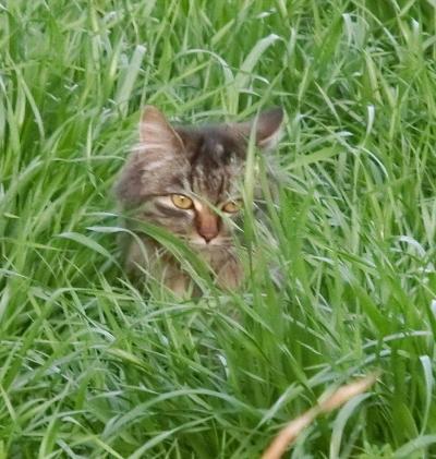 180612-野良猫さん-3