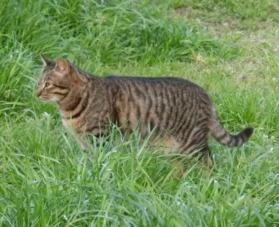 180612-野良猫さん-4