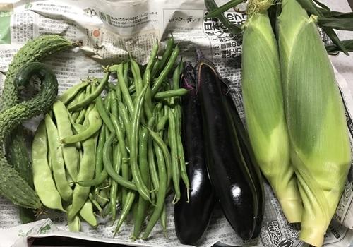 野菜たち2018