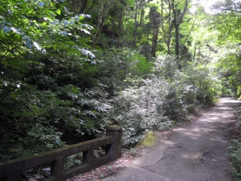 谷戸川沿いの道黒岩方面に180711
