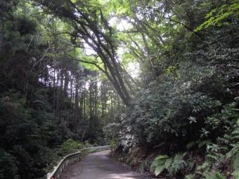 谷戸川沿いの道180711