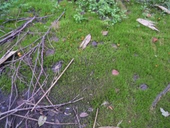 湿地にキノコ180728