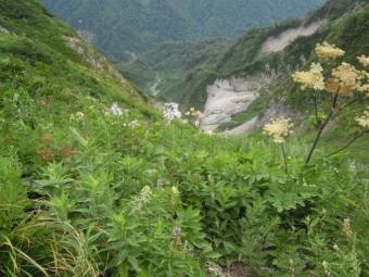 色々な花が咲いている180728