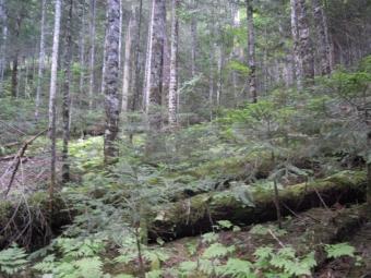 樹林帯を進む180804