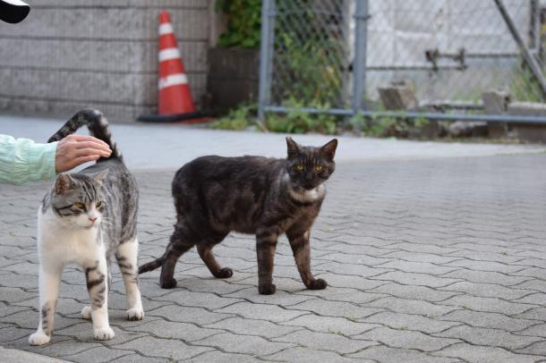 猫23,25