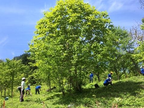 ブラザーの森・環境活動