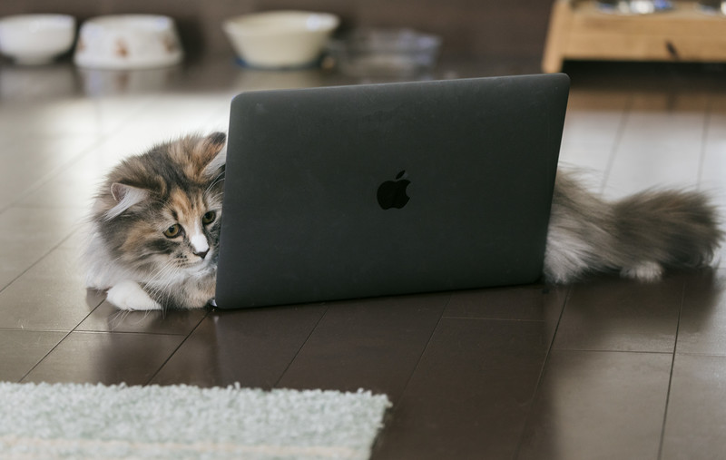 cat126IMGL6353_TP_V4.jpg