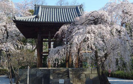 3月25日増上寺