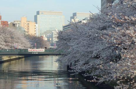 深川桜まつり