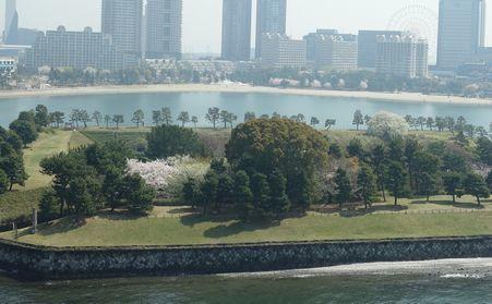 3月29日第三台場の大島桜