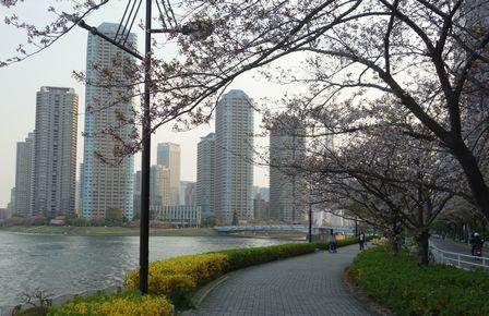 4月2日墨田河畔から石川島を望む
