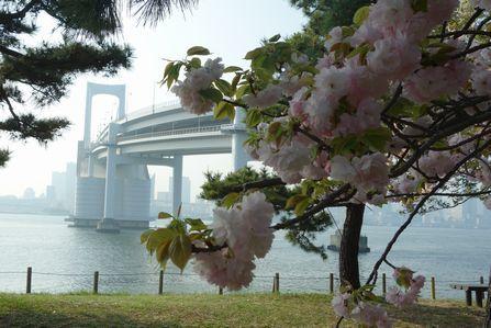 4月3日第三台場は八重桜が満開