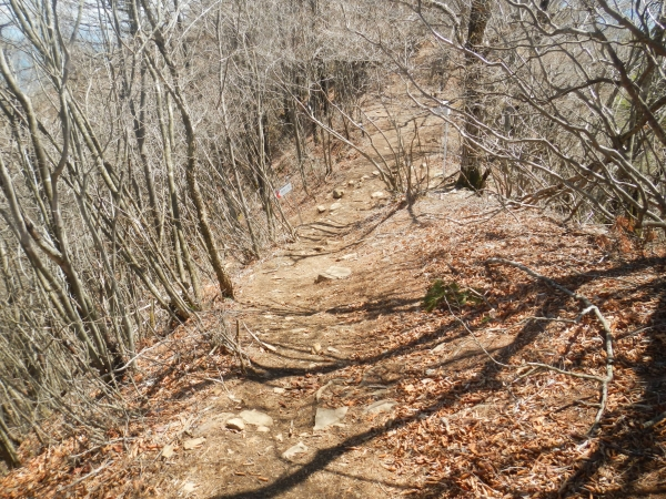 滝子山 055