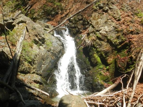 滝子山 075