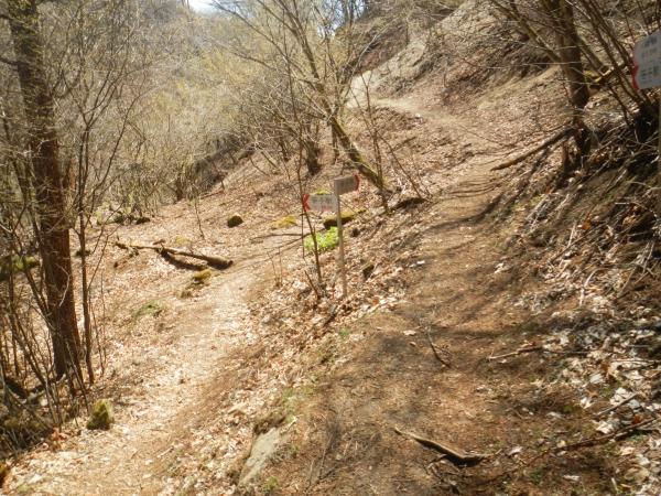 滝子山 069