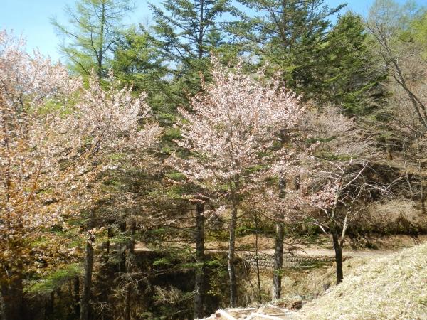 笠取山 064