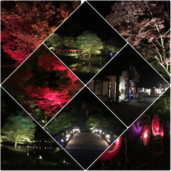 修善寺 虹の郷「青葉とライトアップ一新緑の宴」