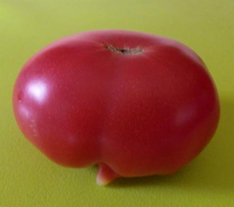 突起物のあるトマト
