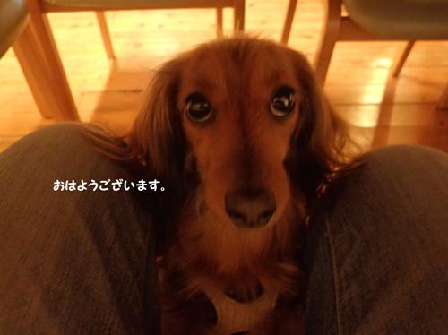 fuji41.jpg