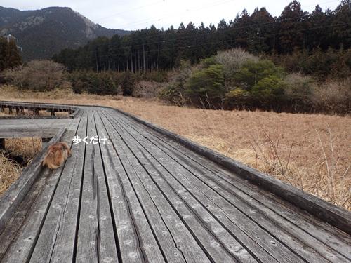 fuji61.jpg