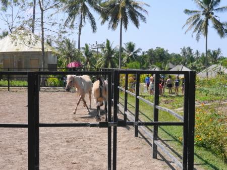 馬の放牧もあるホテル