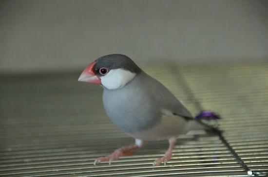 換羽でビクビク