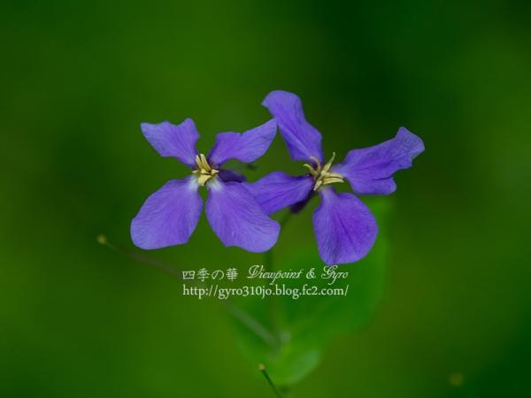 春の花 C