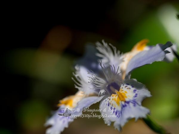 春の花 B