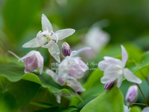 春の花 E
