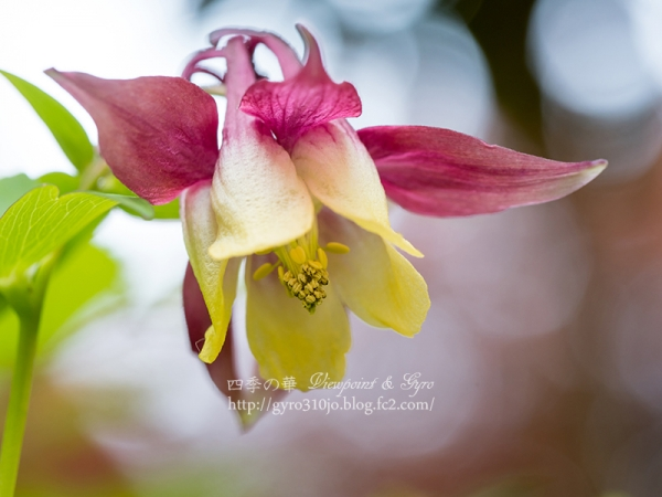 春の花 H