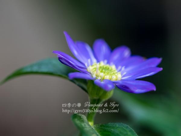 春の花 G