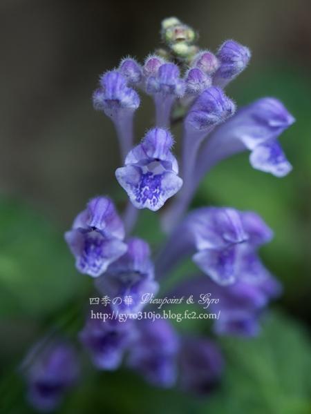 春の花 F