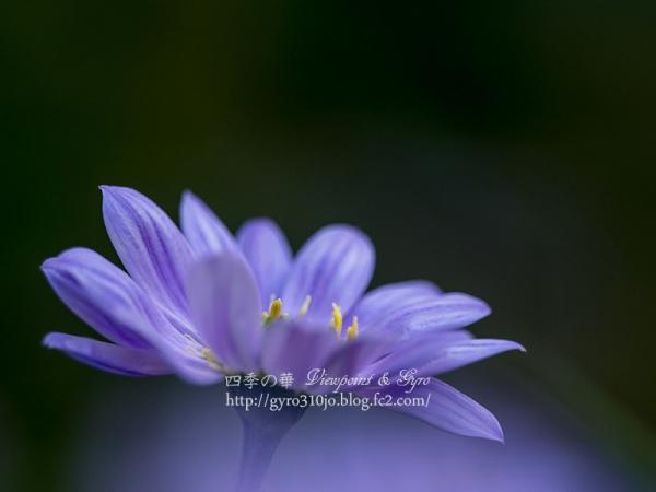 春の花 D