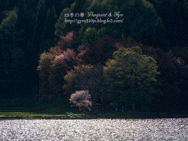 中綱湖 B