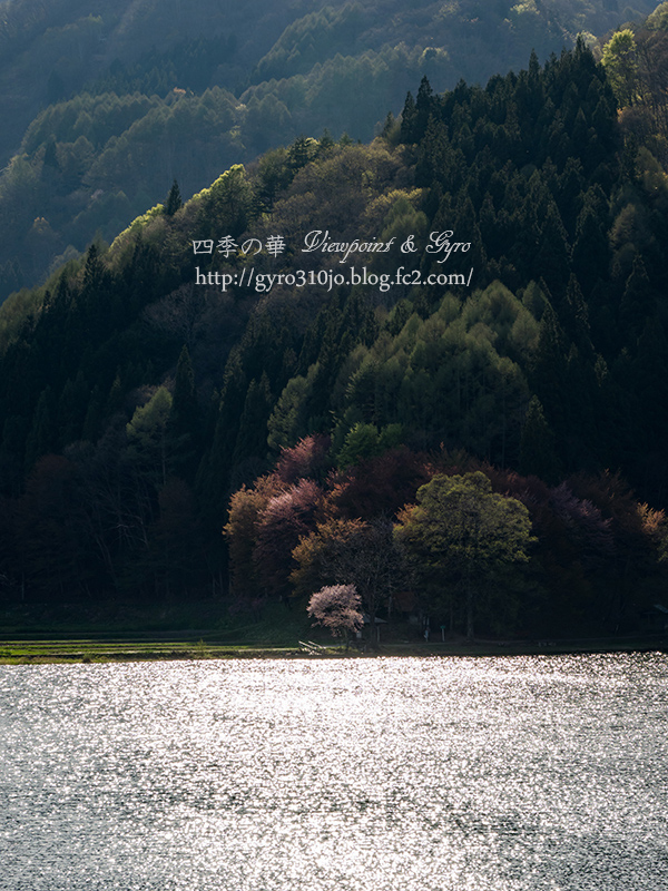 中綱湖 E